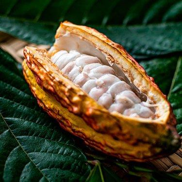 Chocolatier cacaoculteur Jeff de Bruges un chocolat plus responsable
